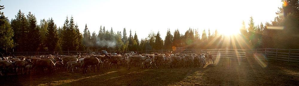 Vuovdega – Skogssamerna